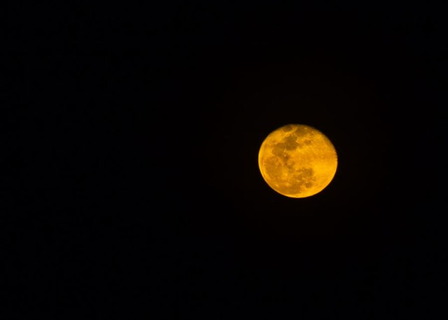 The famous red moon of the Kimberley. © Copyright Alexis Smith 2012 All Rights Reserved.